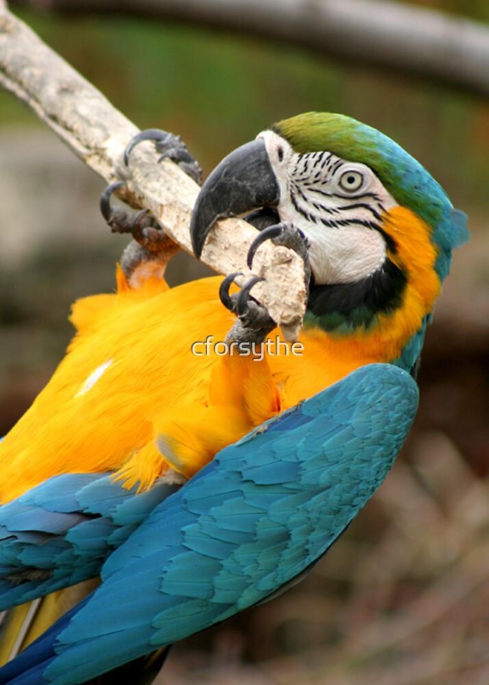 Parrot by cforsythe