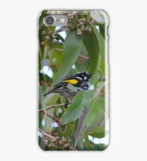 New Holland Honeyeater iPhone Case/Skin