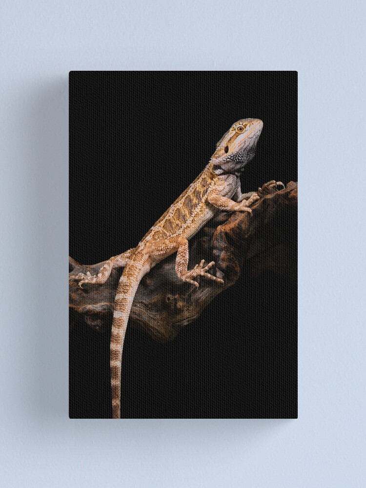 Alternate view of Central Bearded Dragon [Pogona vitticeps] Canvas Print