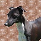 Italian Greyhound.. by Cazzie Cathcart