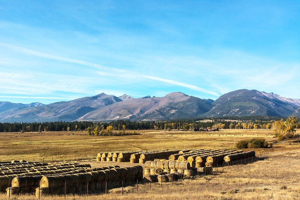Hay is in for the season by Bryan D. Spellman
