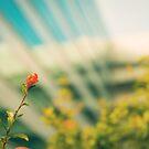 Urban Flower by Conundrum Arts