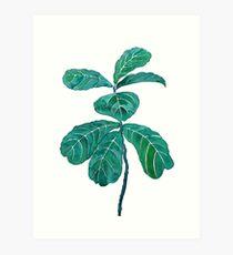 fiddle leaf fig watercolor  Art Print