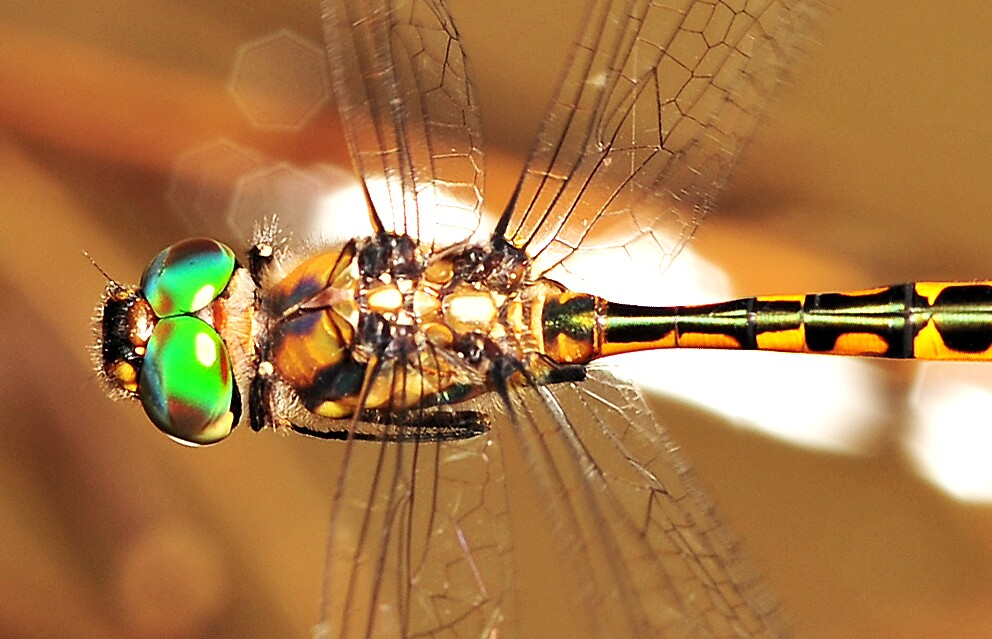 Dragonfly by Narelle Power