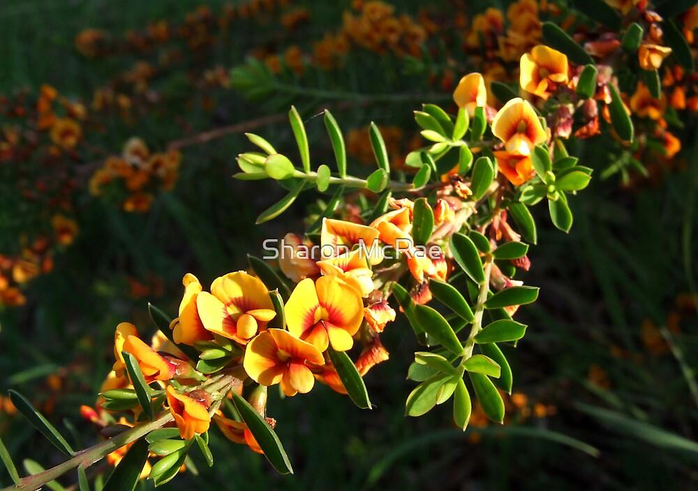 Bush Flower by SharonD