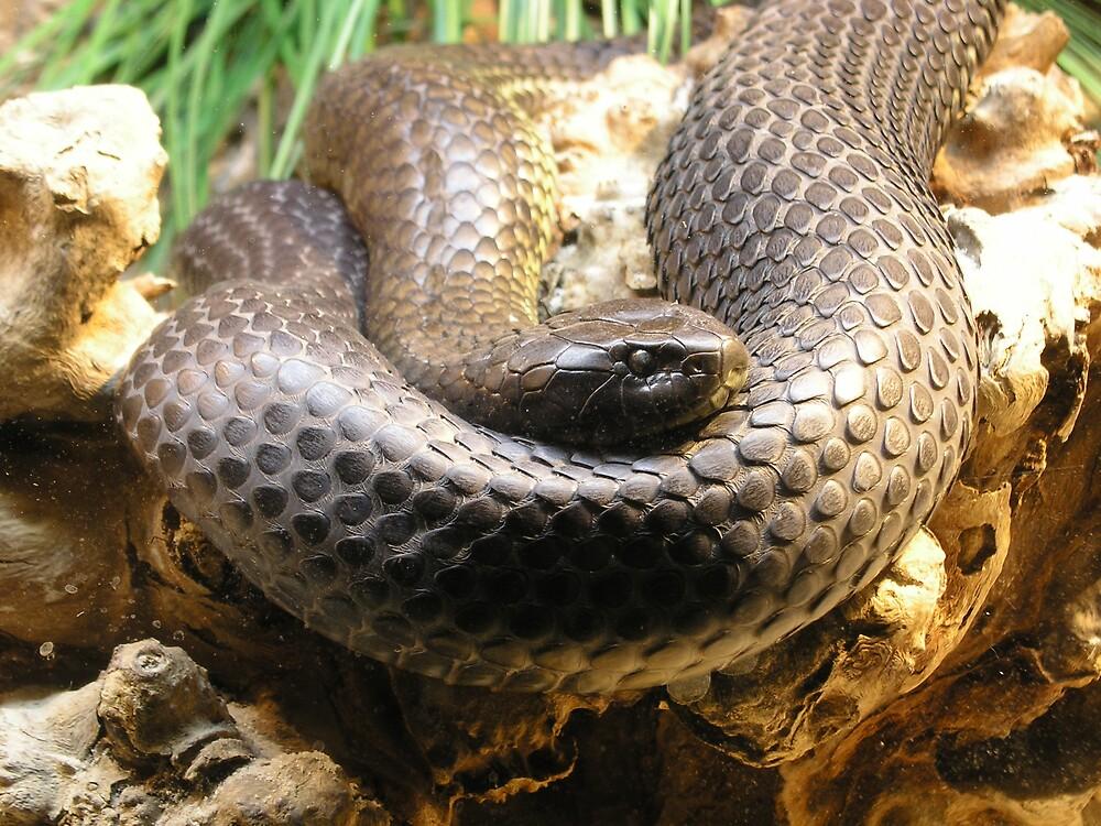 Brown snake by mirken21
