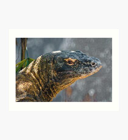 Komodo Monitor Art Print