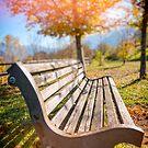 Bench and fall tree by Silvia Ganora