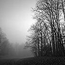 Tree Silhouette by Eileen McVey