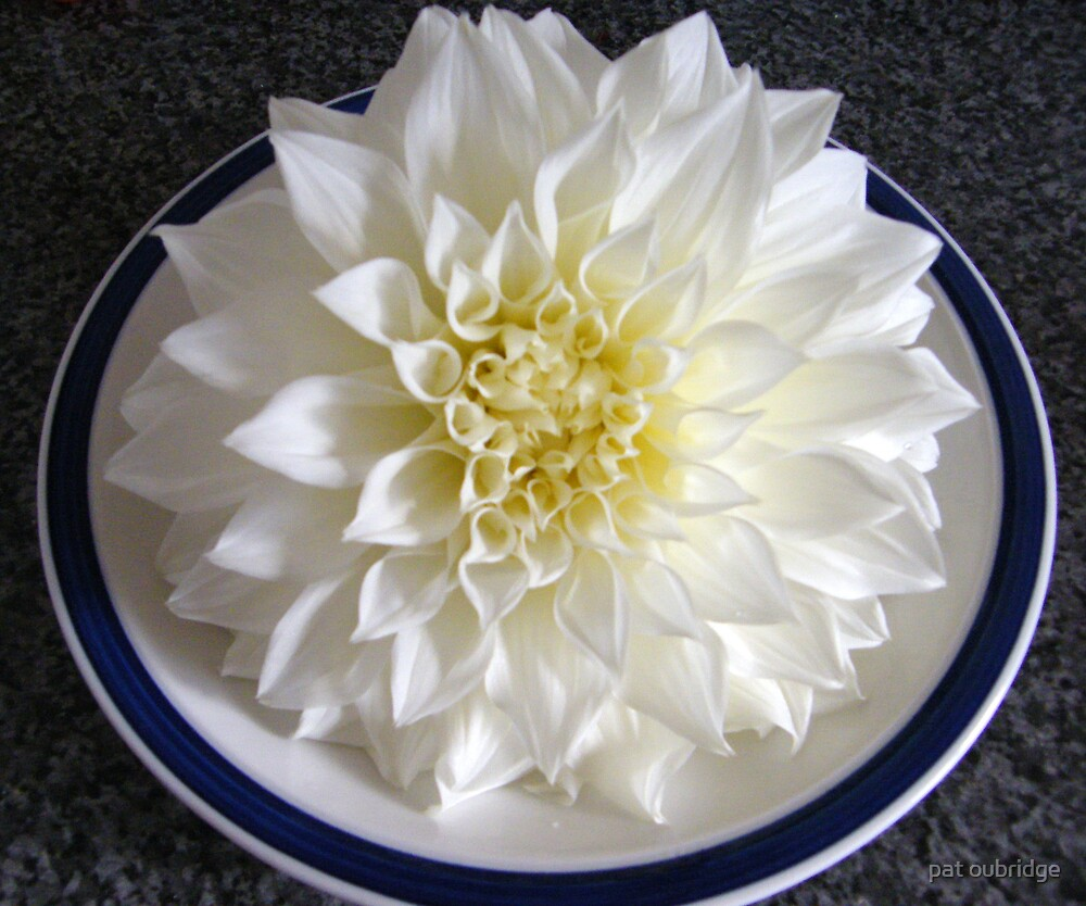 Dinner Plate Dahlia by pat oubridge