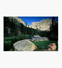 1056-Wild Friends Photographic Print