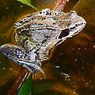 Fractual Frog by Trevor Kersley