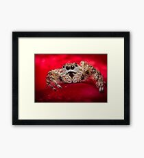 Jumping Spider Macro Framed Print