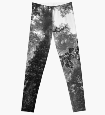 Look up - and up and up! Leggings