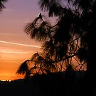 Sunset in Southern California by Clayton Bruster