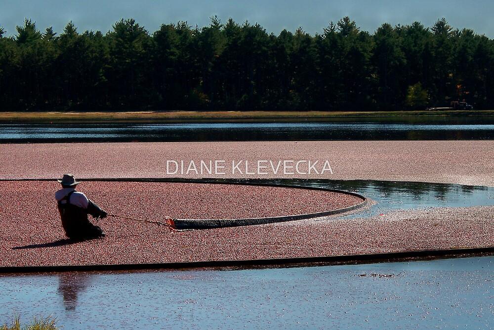 Working the bog by DIANE KLEVECKA