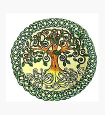 Celtic Tree of Life Photographic Print