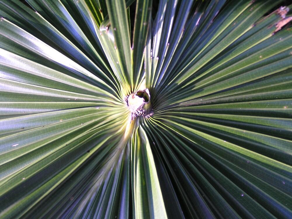 Palm leaf by Anna D'Accione