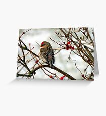 Common Redpoll on Bush with Red Berries Greeting Card