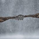 Flight of the Phantom  by Daniel  Parent