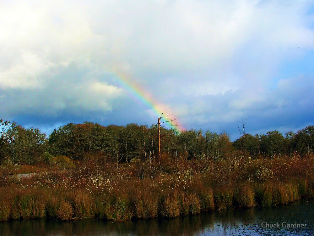 Great Egrets and Rainbows by Chuck Gardner