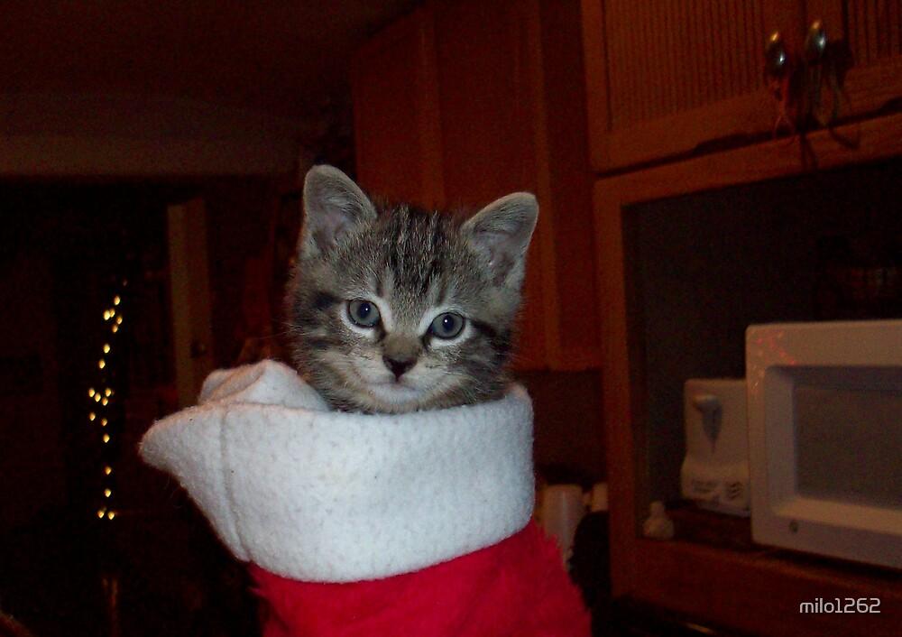 Little Christmas Kitten by milo1262