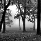 Empty Bench In The Fog Black & White by Dawne Dunton