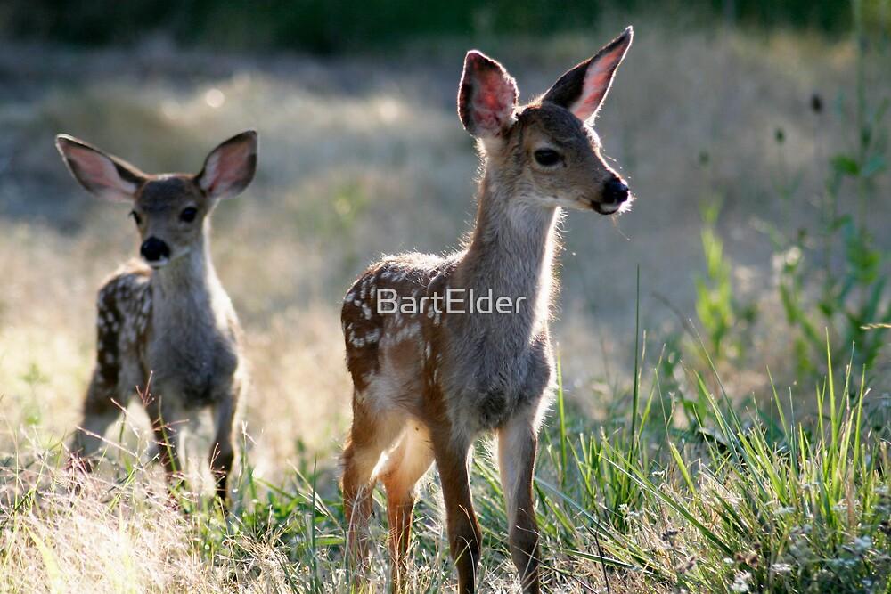 Two fawn Deer - 1838 by BartElder