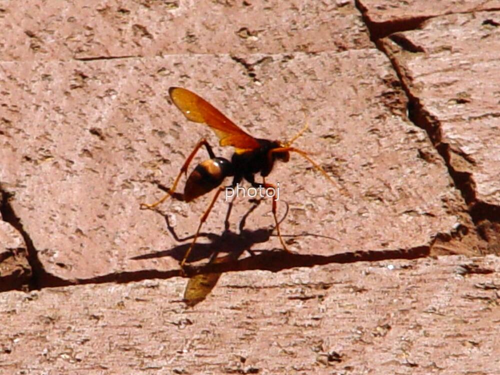 photoj Bugs by photoj