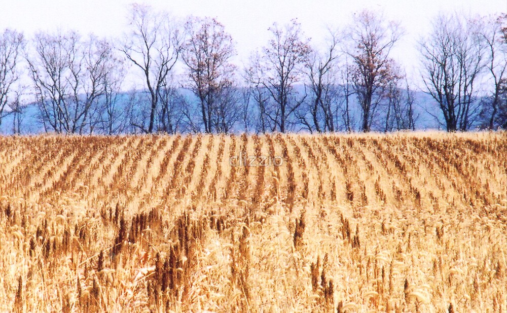 The Field  by clizzio