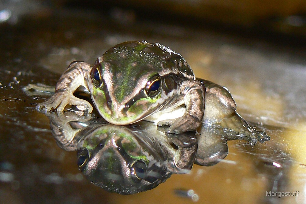 Froggy reflection by Margestuff