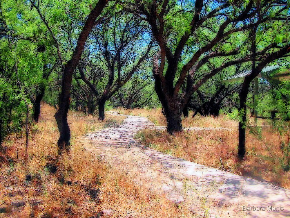 On the Path by Barbara Manis