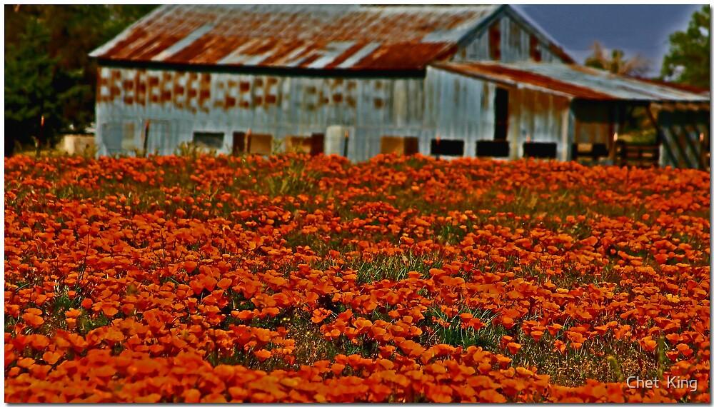 Poppy Field by Chet  King