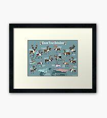 Know Your Reindeer Framed Print