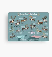 Know Your Reindeer Canvas Print