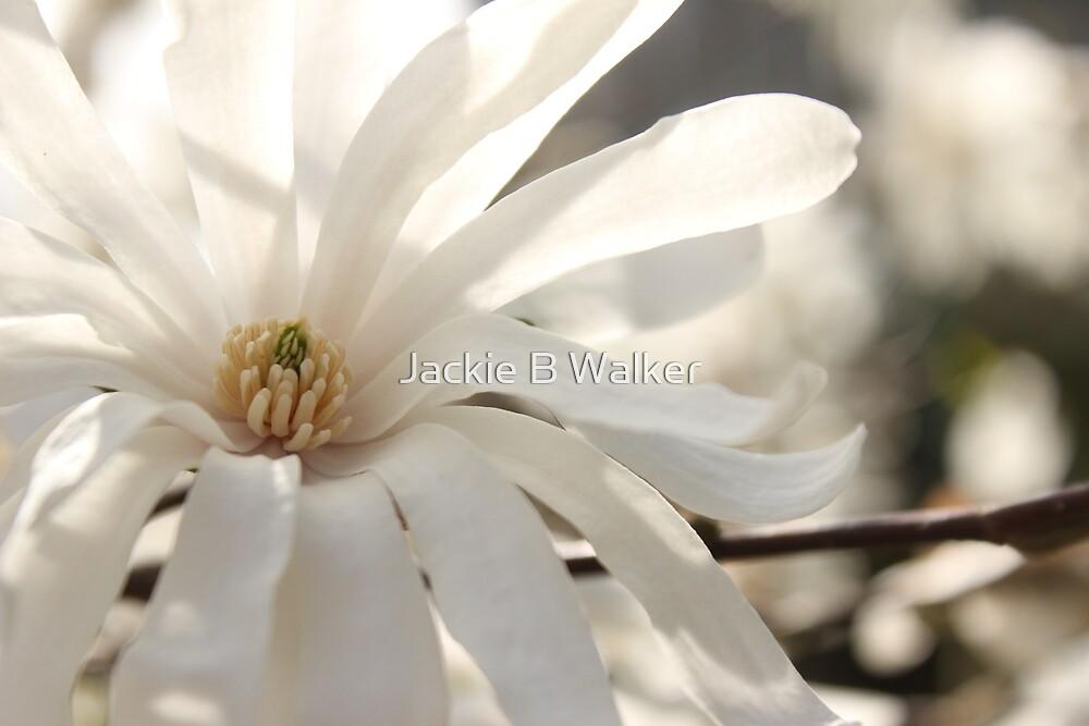 White flower  by Jackie Brock Walker