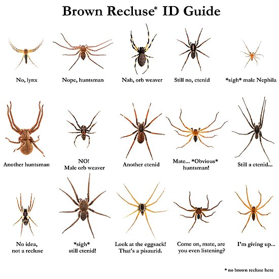 Quot Brown Recluse Id Guide Quot Poster By Arthrolove Redbubble