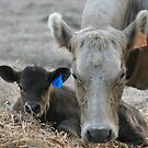 My Muvver, The Cow by saharabelle