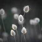 Fauna and Flora by JaimeWalsh