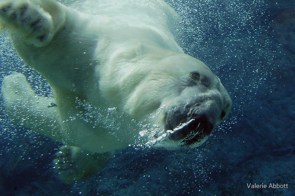 Polar Bear (Ursus maritmus) by Valerie Abbott