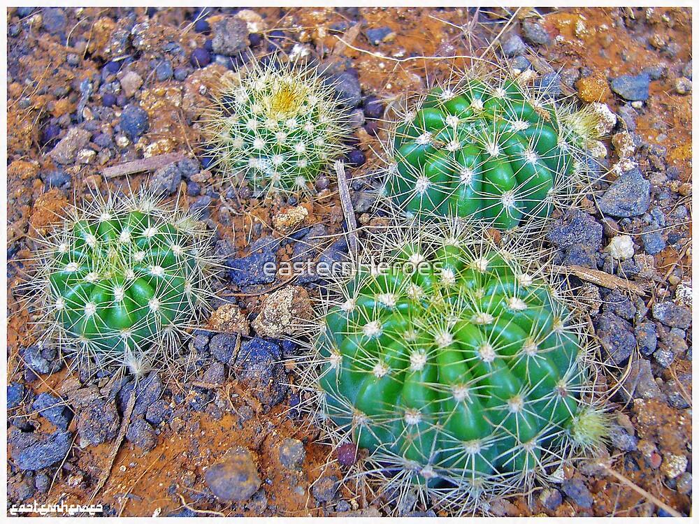 kaktus by easternHeroes