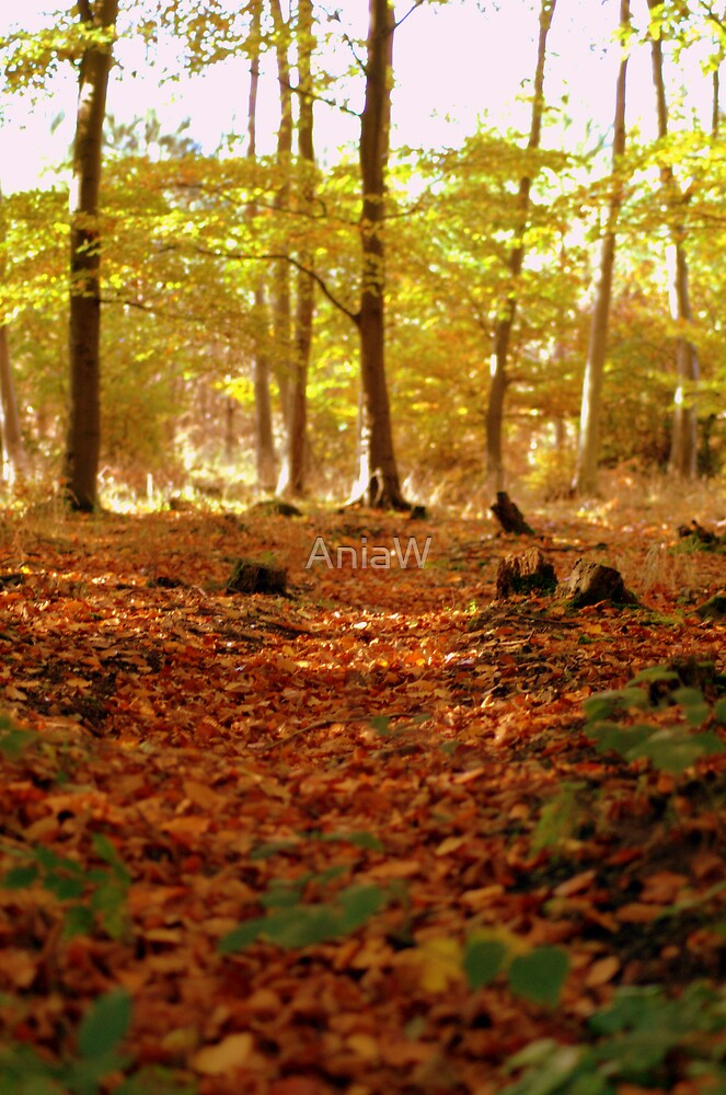 Golden Fall by AniaW