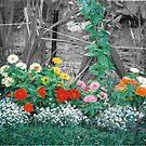 Margs Garden by Barbara A. Boal