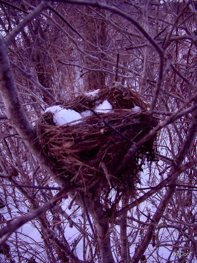 Old Nest by JimCool