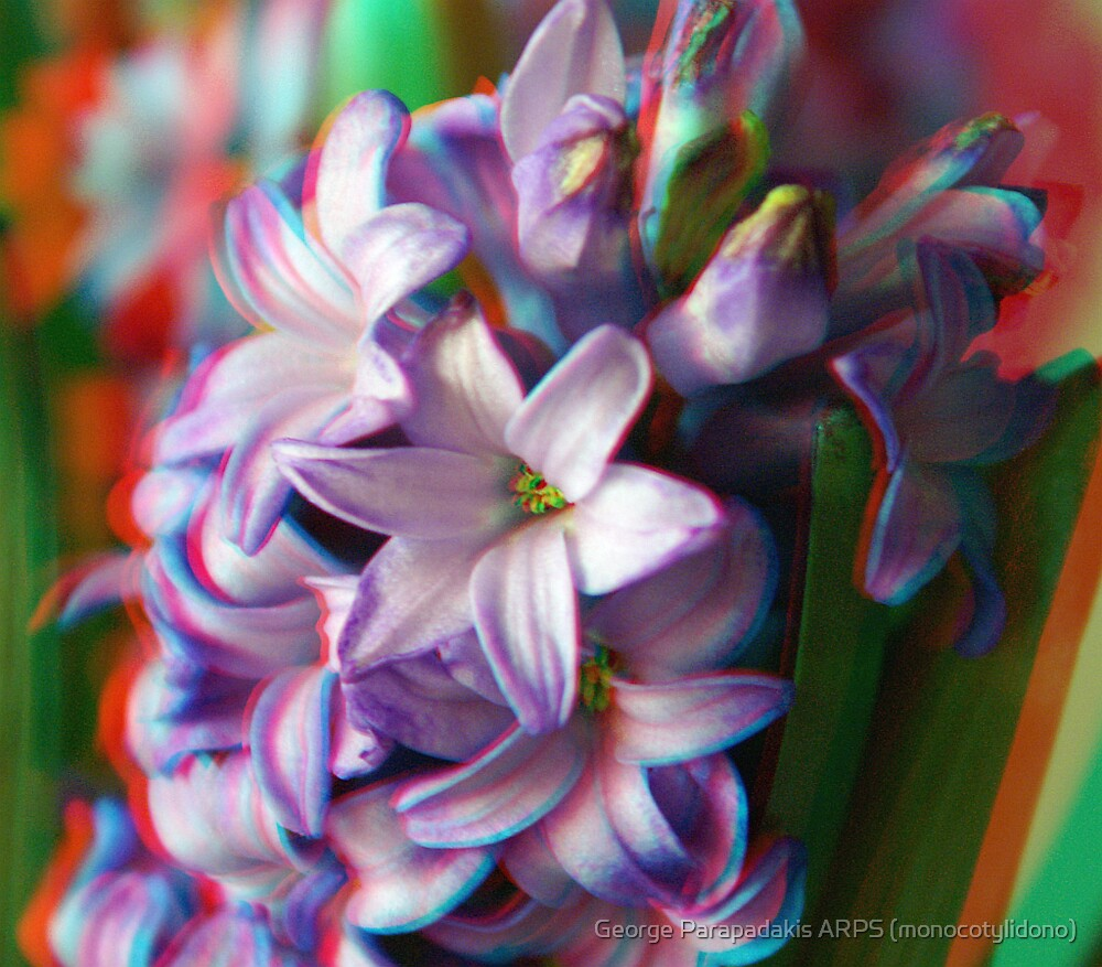 [3D] Hyacinth by George Parapadakis ARPS (monocotylidono)