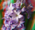 [3D] Hyacinth by George Parapadakis (monocotylidono)