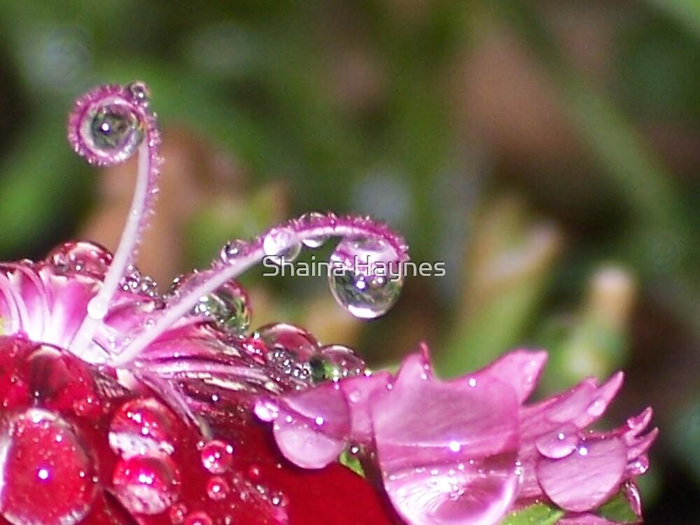 Diamond Drops by Shaina Haynes
