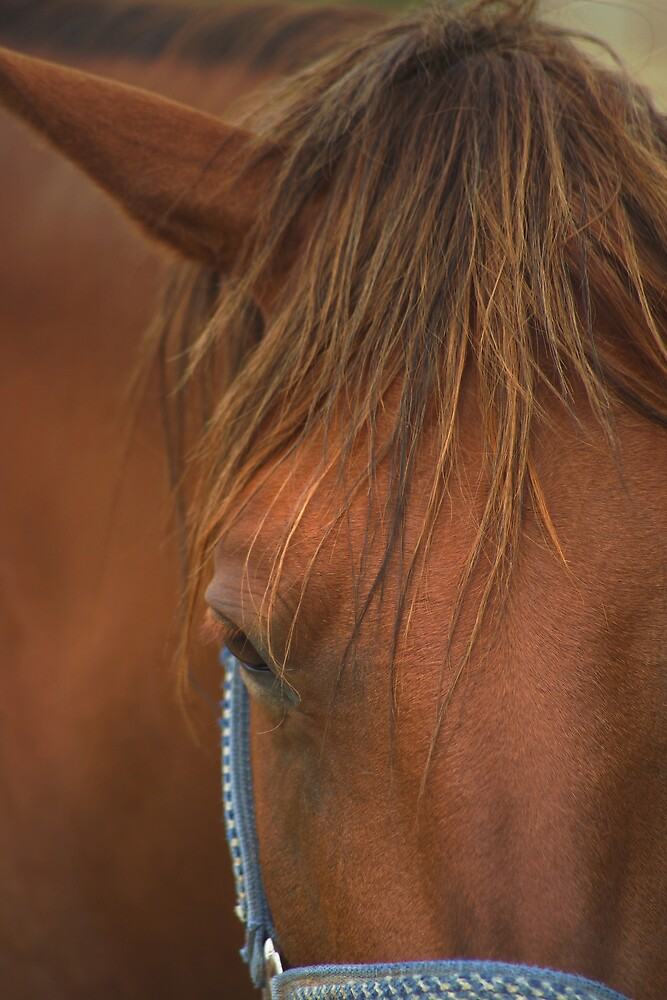 Horse portrait taken near Goodyear Arizona. by Dennis Begnoche Jr.