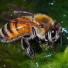 The Honey Bee 2 by Virginia N. Fred