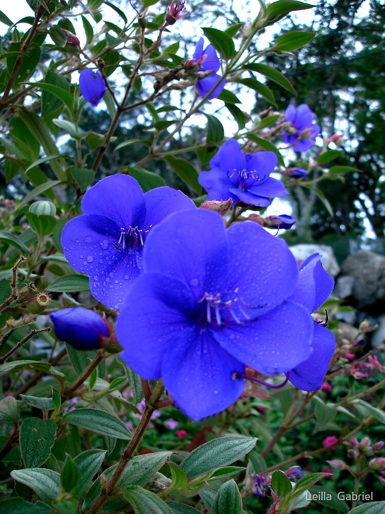 Blue by Leilla  Gabriel